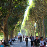 Allée du Jardin des Plantes