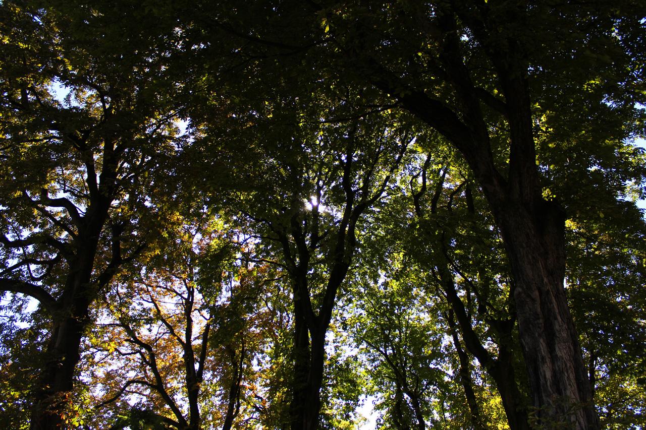 Voir paris en vert changez de regard nul en photo for Le jardin du pic vert