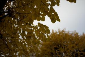 Une photo avec une ouverture à f/1.4