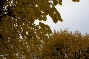 Photo avec une ouverture à f/5.6